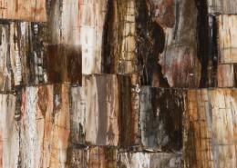 Petrified Wood - Classic